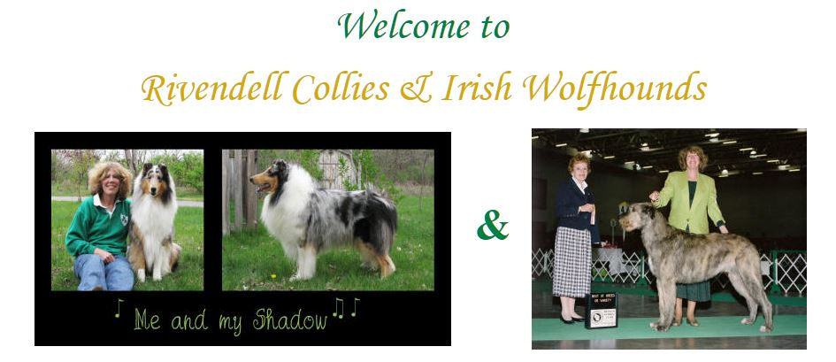 Rivendell Collies and Irish Wolfhounds